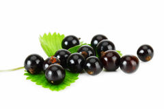 Blackcurrant. Black currant on the white background Royalty Free Stock Photo