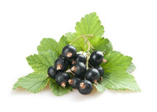 Blackcurrant Royalty Free Stock Image
