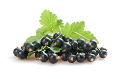 Free Blackcurrant Royalty Free Stock Photography - 20999537