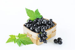 blackcurrant lizenzfreies stockbild