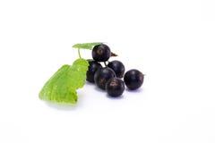 blackcurrant stock afbeelding
