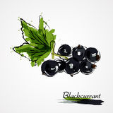 blackcurrant Stock Afbeeldingen