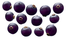 blackcurrant Stockbilder
