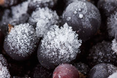 Blackcurrant background, covered with ice and snow Stock Images