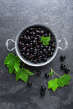Blackcurrant berries with leaves, black currant Stock Photos