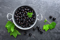 Blackcurrant berries with leaves, black currant. Top view royalty free stock images