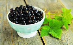 Blackcurrant Royalty Free Stock Photography
