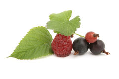 Blackcurrant and blackberry Royalty Free Stock Image