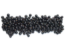 Blackcurrant border. A border of blackcurrant on a white background with copy space stock photo