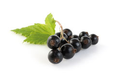 Blackcurrant bunch Stock Photos