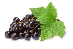 Blackcurrant bunch (Ribes Nigrum), clipping path. Blackcurrant bunch (Ribes Nigrum) with leaves. Clipping path, shadow separated, infinite depth of filed stock images
