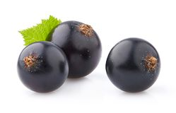 Blackcurrant in close-up Stock Foto