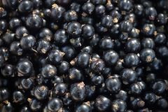 Blackcurrant closeup Royalty Free Stock Photography