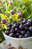Blackcurrant in a cup Stock Photography