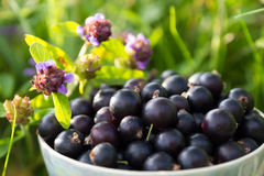Blackcurrant in a cup Stock Images