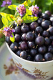 Blackcurrant in a cup Royalty Free Stock Photos