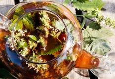 Blackcurrant en melissa aftreksel in transparante theepot Stock Foto