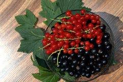 Blackcurrant en rode aalbessen Stock Foto's