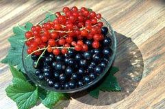 Blackcurrant en rode aalbessen Royalty-vrije Stock Foto