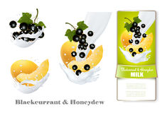 Blackcurrant and honeydew melon in milk splashes. Royalty Free Stock Image