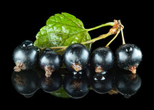 Blackcurrant with leaf isolated on black Royalty Free Stock Image