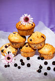Blackcurrant muffins Royalty Free Stock Image