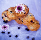 Blackcurrant muffins Stock Photo