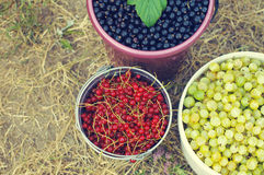 Blackcurrant, red currant and gooseberry in buckets Royalty Free Stock Photos