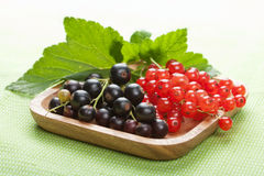 Blackcurrant and redcurrant Stock Photography