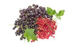 Blackcurrant, redcurrant i jostaberry na lekkim tle, Zdjęcia Royalty Free