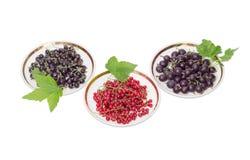 Blackcurrant, redcurrant i jostaberry na spodeczkach na, lekcy półdupki Obraz Stock