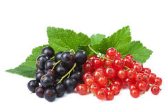 Blackcurrant and redcurrant isolated Stock Image