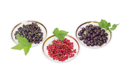 Blackcurrant, redcurrant and jostaberry on saucers on a light ba Stock Image