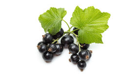 Blackcurrant Royalty Free Stock Photo