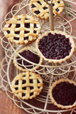 Blackcurrant tartlets Royalty Free Stock Photo