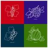 Blackcurrant,Watermelon,Redcurrant,Blackberry Royalty Free Stock Photos