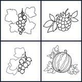 Blackcurrant,Watermelon,Redcurrant,Blackberry Stock Images