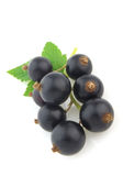 Blackcurrant With Leaves Stock Photos