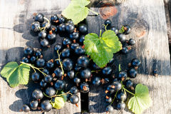Blackcurrant on wooden desks. Blackcurrant berries and leaves on wooden desks at summer day, outside royalty free stock images