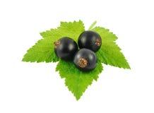 blackcurrants Стоковое Изображение