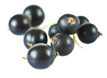 Blackcurrants Royalty-vrije Stock Fotografie
