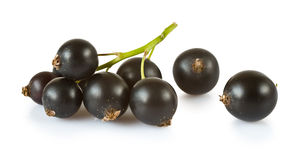Blackcurrants Stock Photography