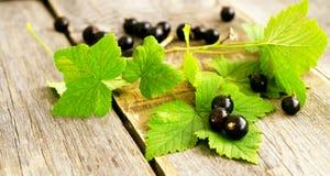 blackcurrants Стоковое Фото