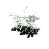 Blackcurrants bryzgają na wodzie, odosobnionej na białym tle Zdjęcie Stock