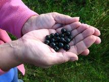 blackcurrants fresly podnoszący Zdjęcia Stock