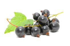 Blackcurrants with Green Leaf Royalty Free Stock Image