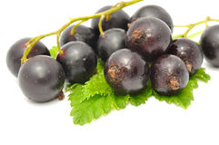 Blackcurrants with Green Leaves Stock Image