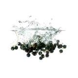 Blackcurrants plons op water, op witte achtergrond wordt geïsoleerd die Royalty-vrije Stock Foto