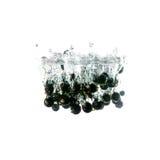 Blackcurrants plons op water, op witte achtergrond wordt geïsoleerd die Stock Fotografie