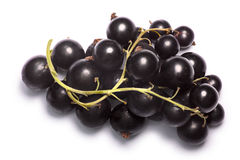 Blackcurrants Ribes nigrum clusters, top view, paths. Blackcurrant clusters berries of Ribes nigrum, top view. Clipping paths, shadow separated royalty free stock photos